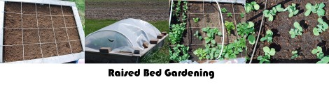 gardening with kids in a raised bed math lesson