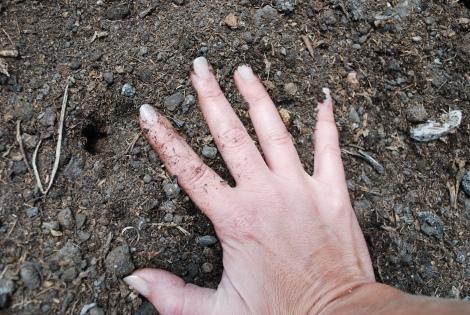 soil experiment
