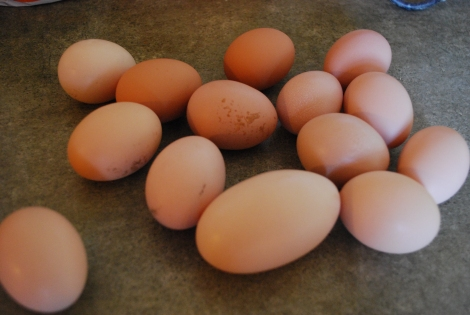 Farm Fresh Eggs, not what you'll see in the grocery store!