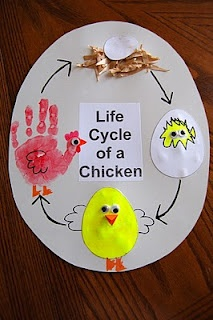 Baby chick theme unit life cycle