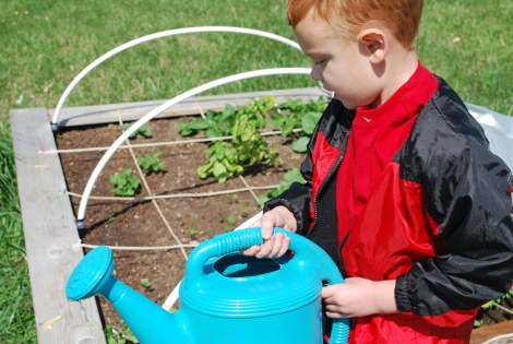 What I've learned aout gardening with a busy family