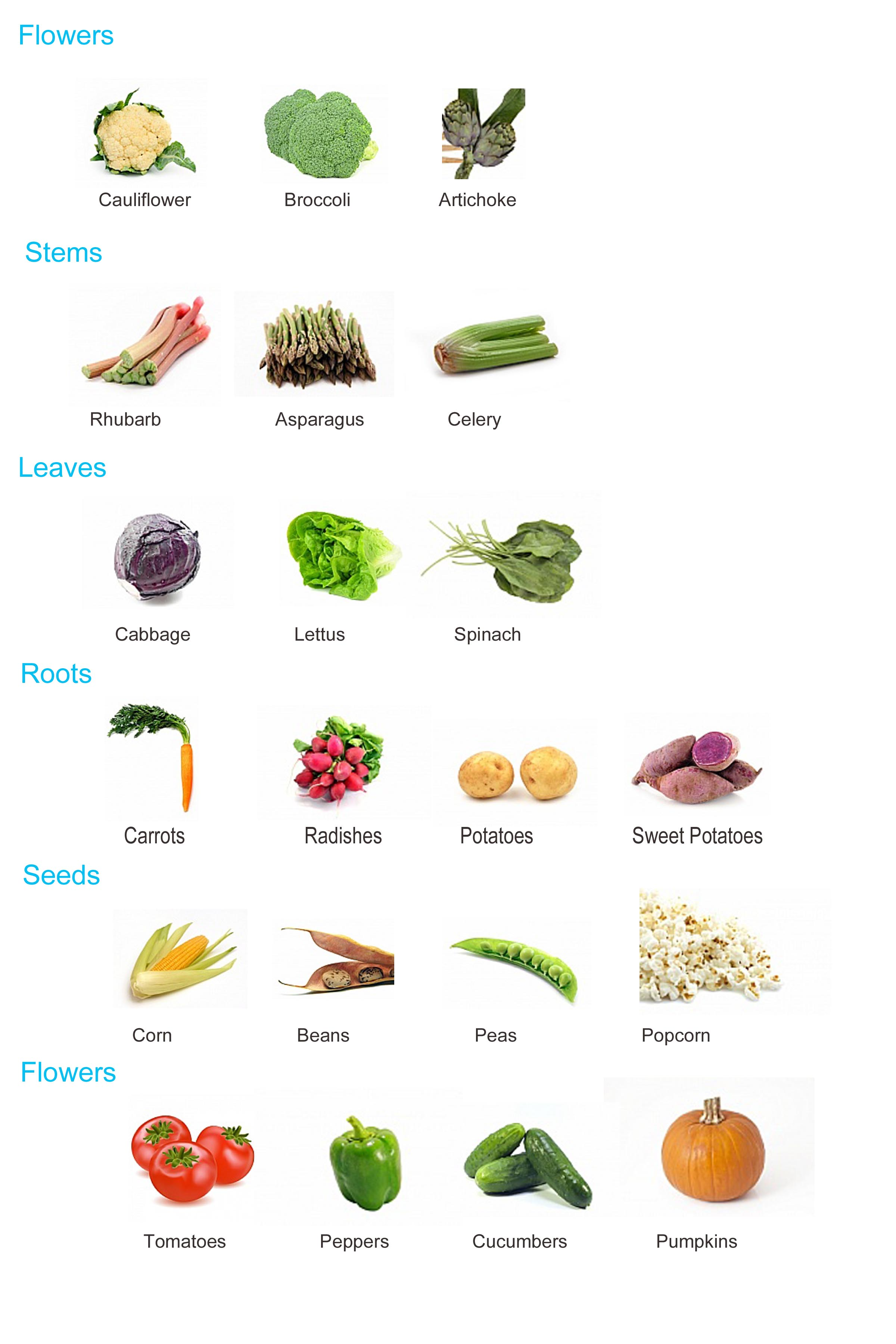 Plant Parts Used for Food http://daddystractor.com/2013/03/04/a-farm-lesson-plan-who-grew-my-soup/