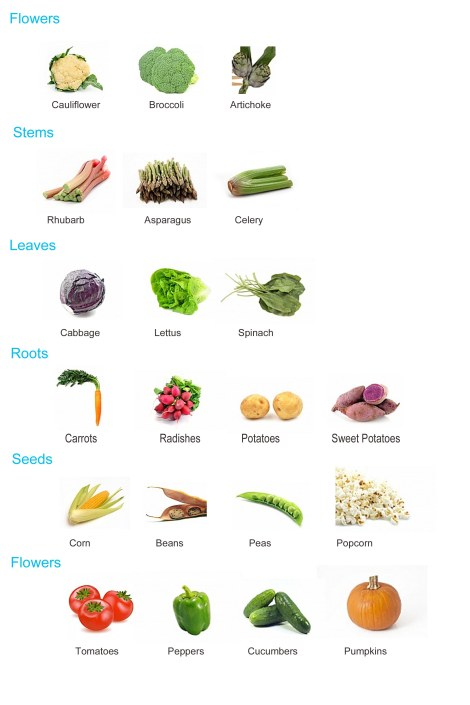 Farm Lesson Plan, Parts of the Plant we use for food