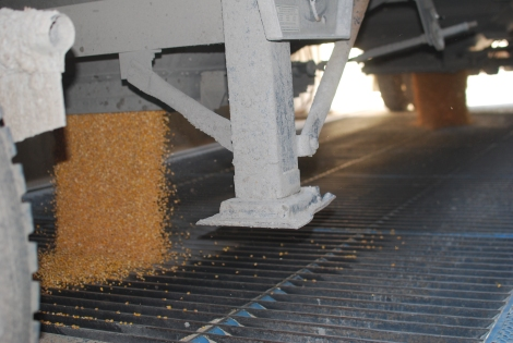 Daddy cranks open the hoppers on the bottom of the trailer and corn flows out!  This, I might add, is about the best part and the whole reason to sit for hours in a semi truck!