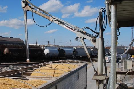 Hauling Grain (49)