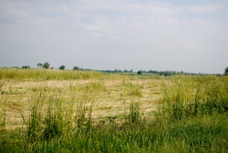 Farm Ugly! How farmers are taking care of the land. {DaddysTractor.com}