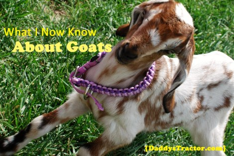 .Bottle-fed baby goats join us on the farm!  {DaddysTractor.com}
