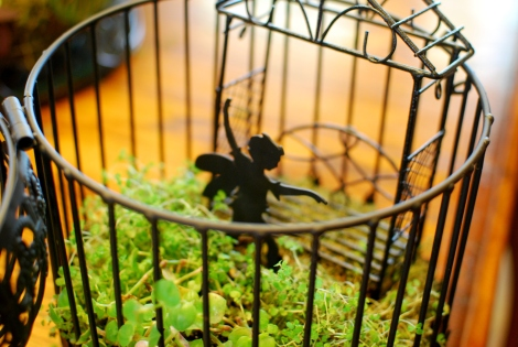 A Fairy garden inside a bird house  {DaddysTractor.com}