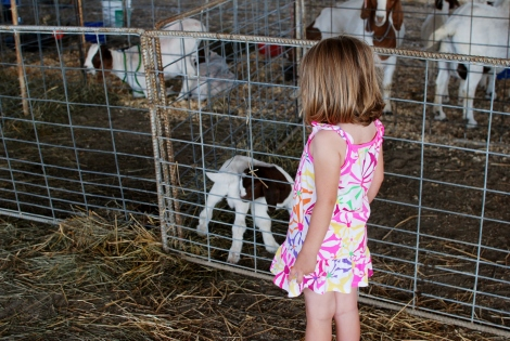 The Whole Farm Life Thing {DaddysTractor.com}