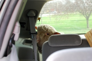 That's a picture of a sheep in a mini van