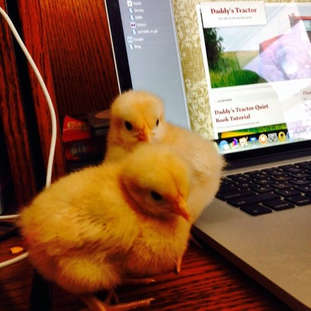 """Not so """"little"""" animals on the farm!  {DaddysTractor.com}"""