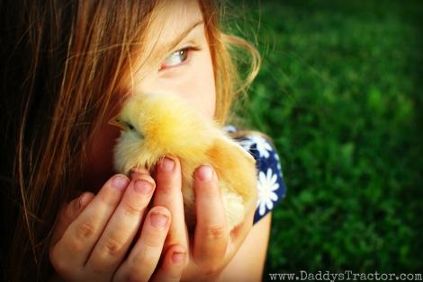 Momma hen and baby chick!  {DaddysTractor.com}