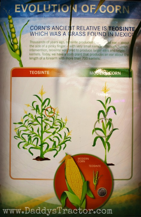corn evolution3