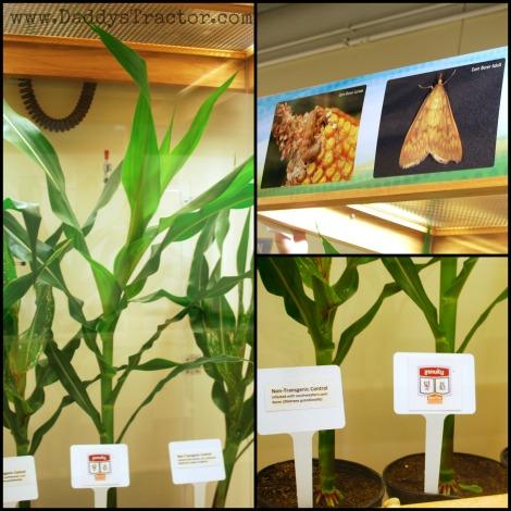 Why do farmers use GMO crops?