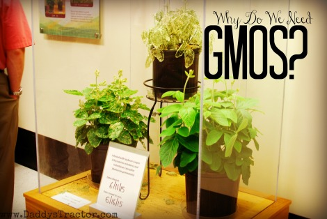 Why do farmers use GMO crops?
